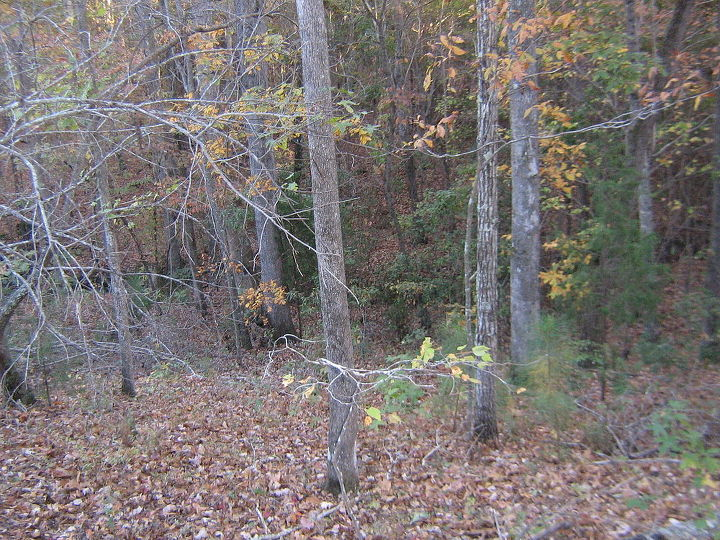 wooded slope needs attention, landscape, This is the drop off to the creekbed in the rear of the property