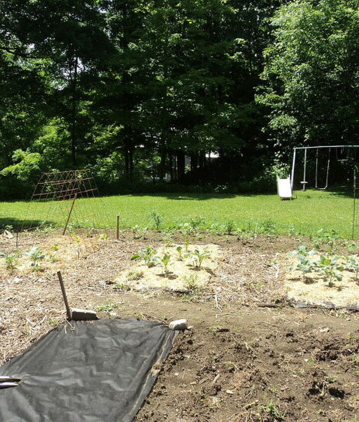 veg garden, gardening