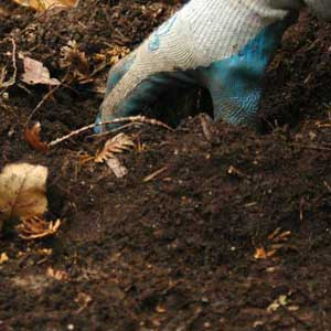Collect soil form the back yard and place it in the bottle.