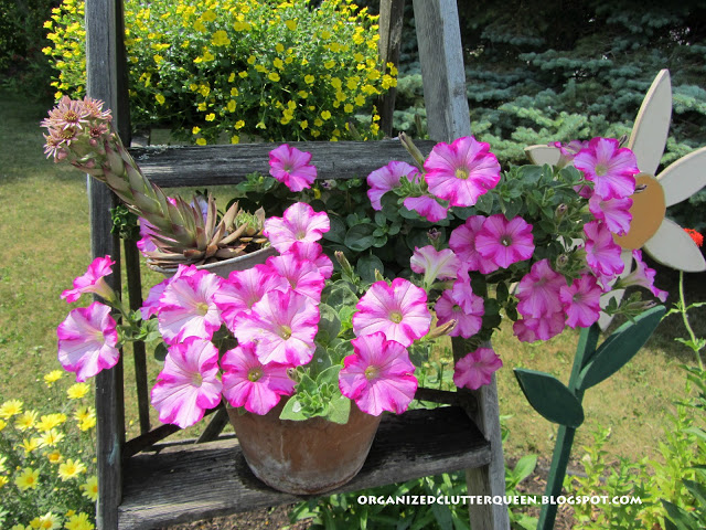 In Metamorphosis Monday, I share the my stepladder and funnel plantings. http://organizedclutterqueen.blogspot.com/2012/07/metamorphisis-monday.html