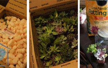 diy succulent terrariums, flowers, gardening, succulents, terrarium