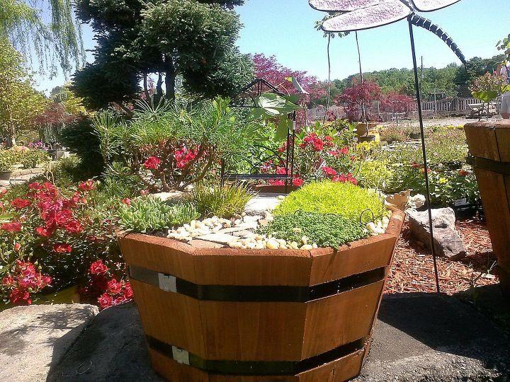 pot rambling, container gardening, flowers, gardening, hydrangea, perennials