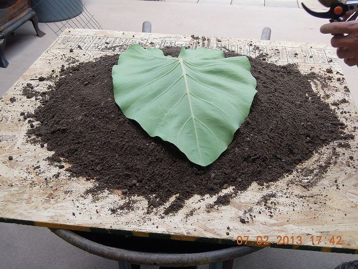 plywood,dirt mound, then lay leaf with underside facing up