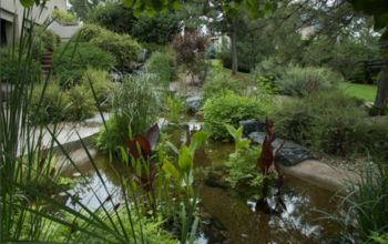 water gardening ponds water features waterfalls koi ponds outdoor lifestyle, outdoor living, ponds water features, A lush Greenwood Village CO pond