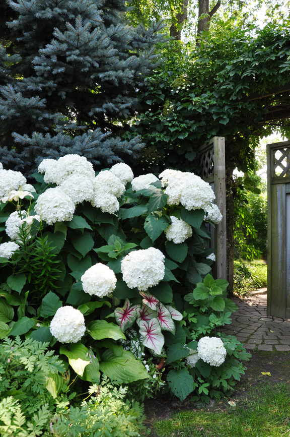 Ideas For That Narrow E In Between Suburban Homes Flowers Gardening Hydrangea