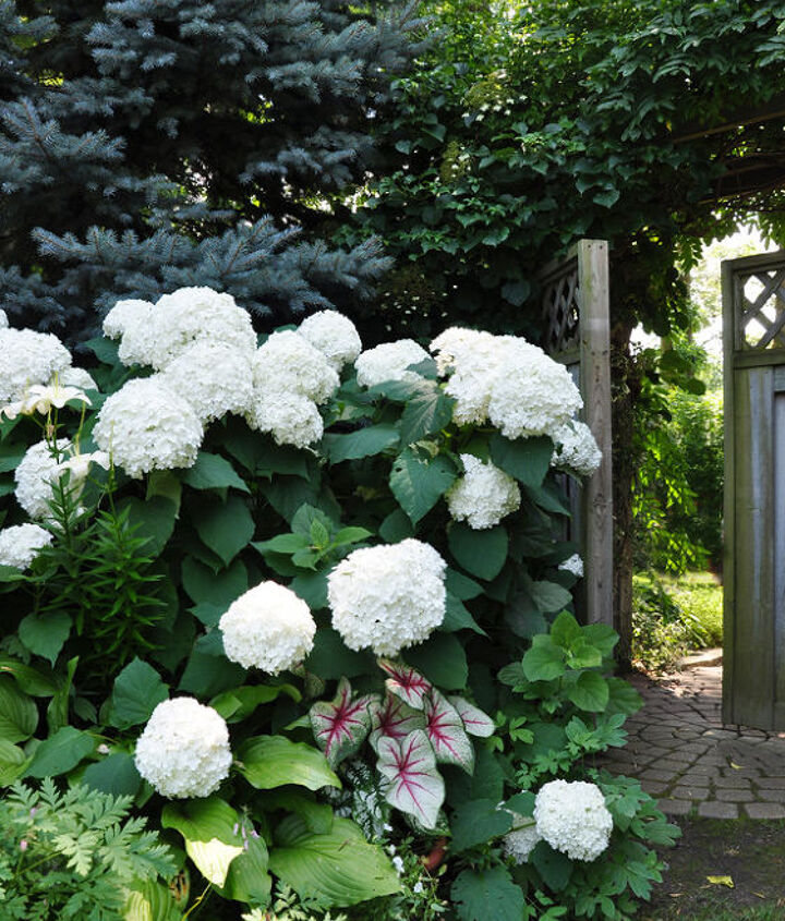 ideas for that narrow space in between suburban homes, flowers, gardening, hydrangea, landscape