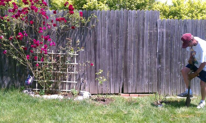 we redid our rose bed, gardening, Beginning had added a couple off to the side