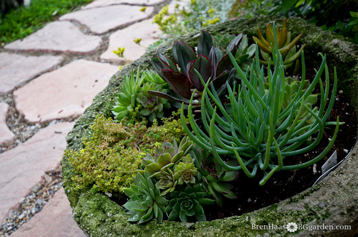 I'm a HUGE fan of succulents : give them a place to show off by adding them to a container front and center!