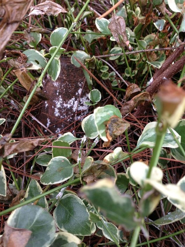 what is killing my plants, gardening, Fungus on a tree stump also