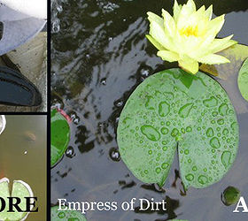 Easy Trick For A Sparkling Clean Pond, Cleaning Tips, Ponds Water Features,  This