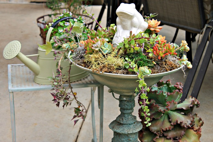 succulent bird bath, flowers, gardening, succulents