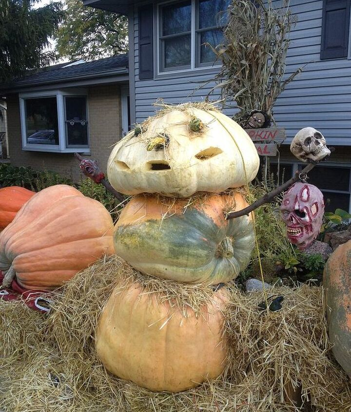 Getting ready for Halloween..Had a lot of extra pumpkins 400, 350, & a 250 lb head.