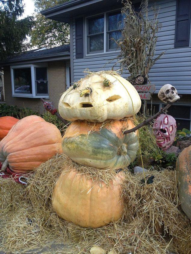 pumpkin snowman, gardening, halloween decorations, seasonal holiday d cor, Getting ready for Halloween Had a lot of extra pumpkins 400 350 a 250 lb head