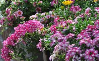 container gardening tips an interview with the editor of gardenmaking, container gardening, flowers, gardening, perennials