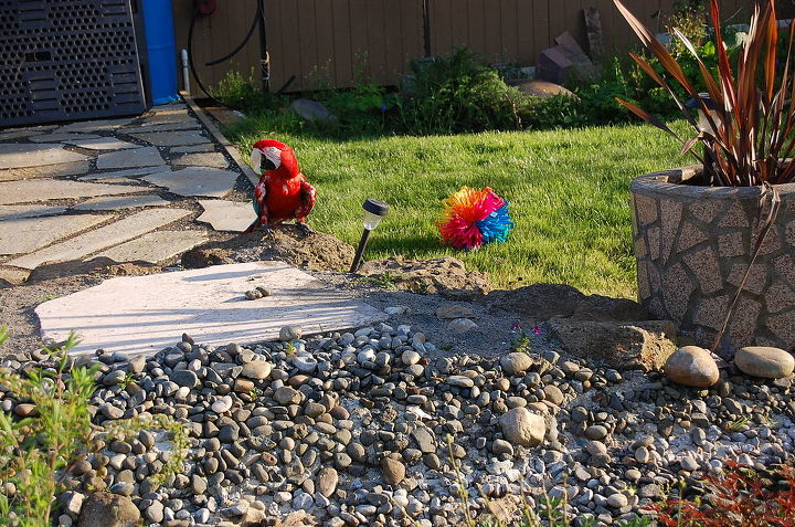 Macaw playing with ball