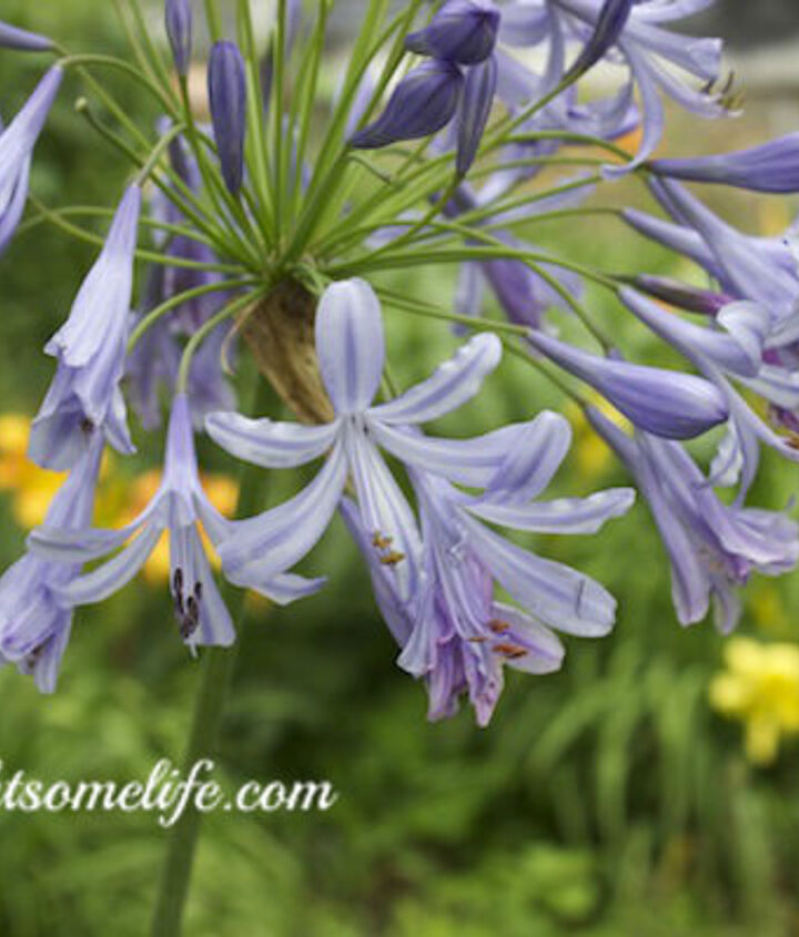 summer blooms and when a plant is not thriving, gardening
