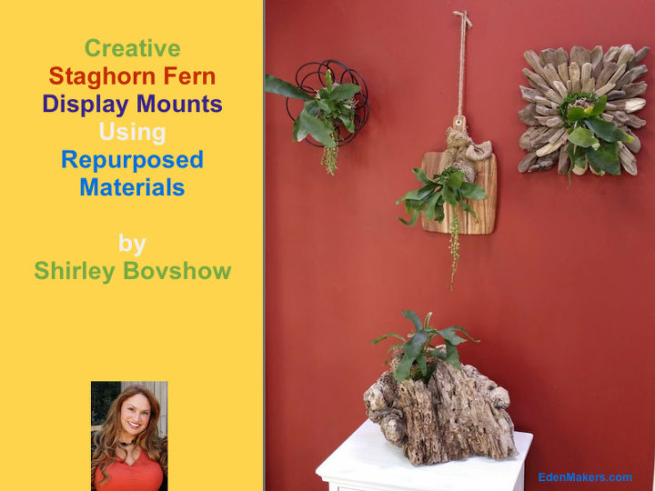 "As seen on the ""Home & Family"" show, (Hallmark). I created a variety of wall mounts for staghorn ferns."