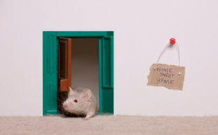 keep mice away plug these 5 gaps in your home, pest control
