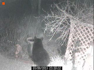 wildlife bear 2, pets animals