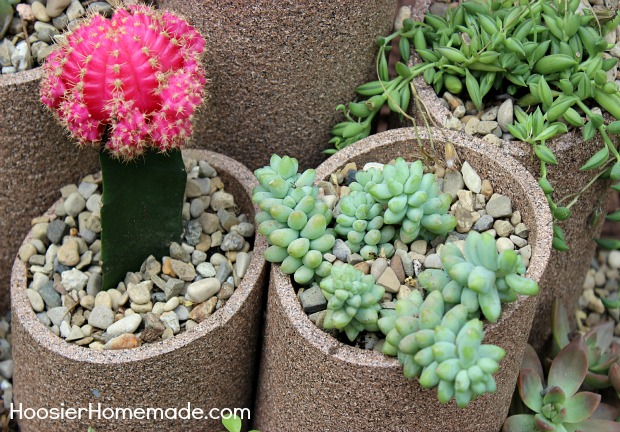 Fill with pea gravel for drainage and soil. Then planted the succulents.
