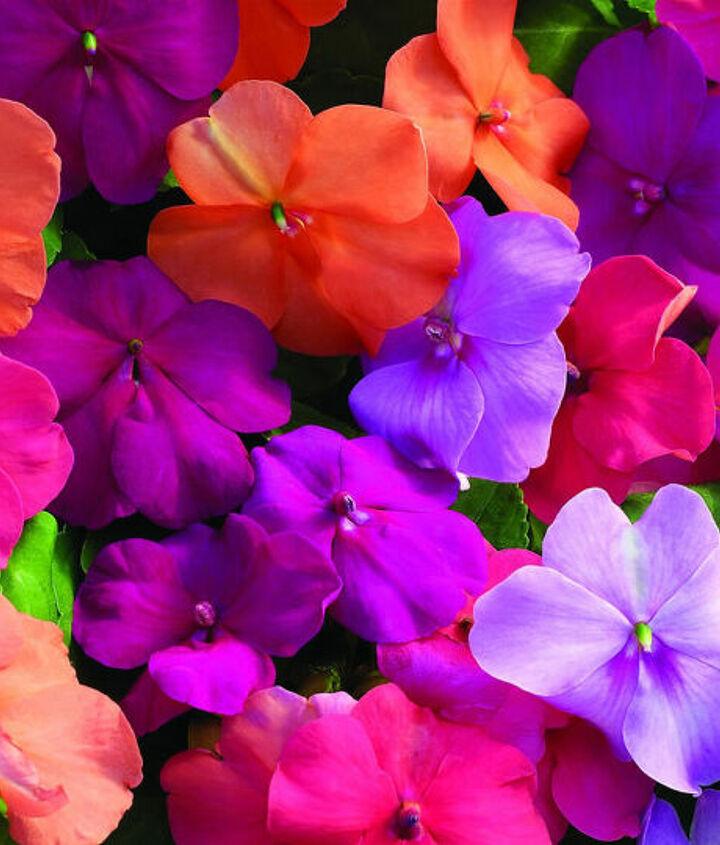 germination of annual flower seeds, flowers, gardening