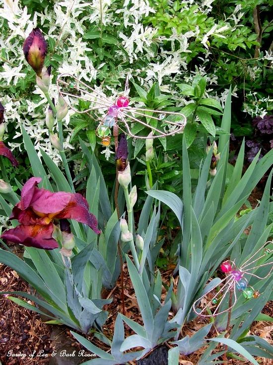 Dad's Burgundy iris & copper dragonflies
