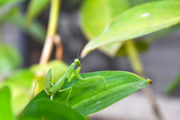 out with the bad in with the good the top 5 bugs to defend your yard, pest control