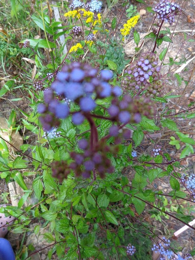 name these plants, flowers, gardening