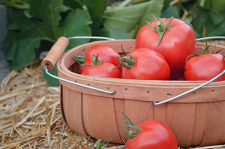 Start with fresh ripe tomatoes, firm and unblemished.