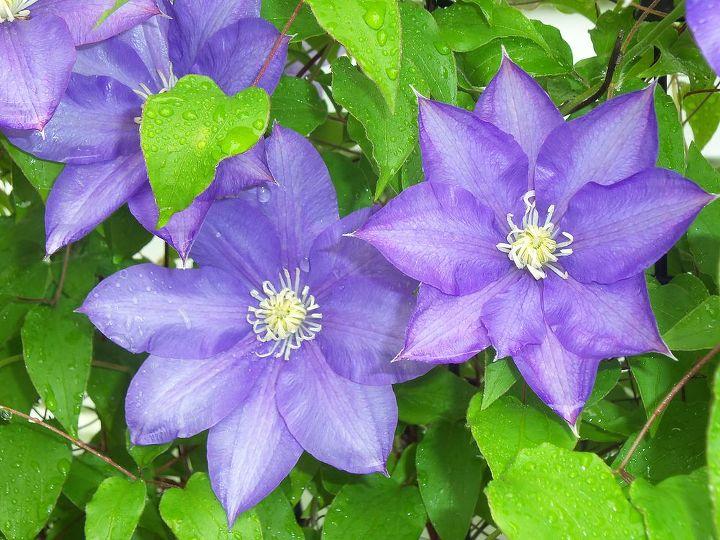 spring flowers, flowers, gardening