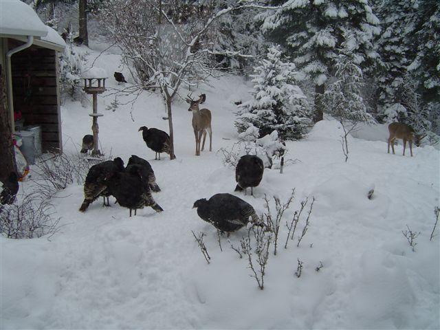 winters beauty, outdoor living, pets animals