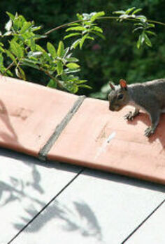 how to keep squirrels out of your attic