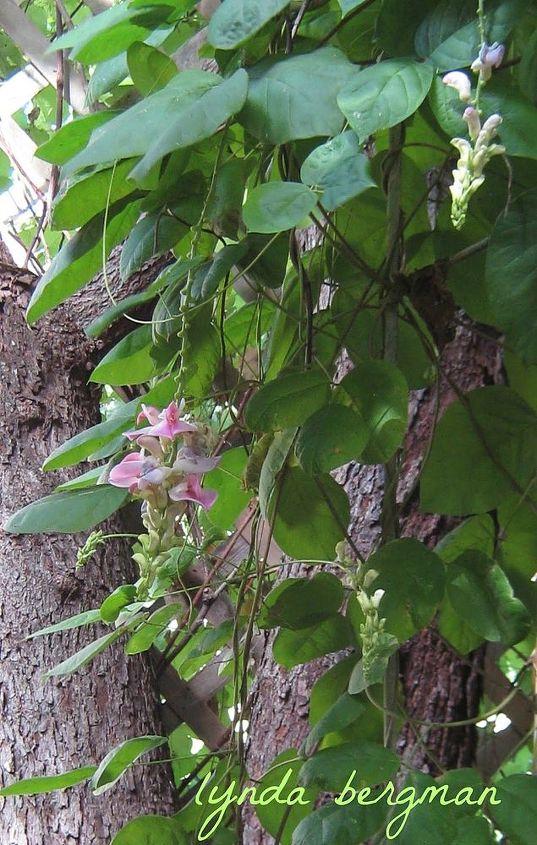 plant identification, gardening