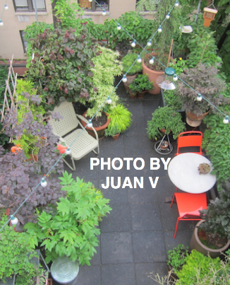 Aerial View of my Garden. (Referred to as Photo-One in post.)
