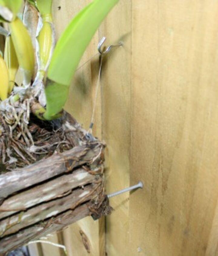 hanging orchid garden, gardening