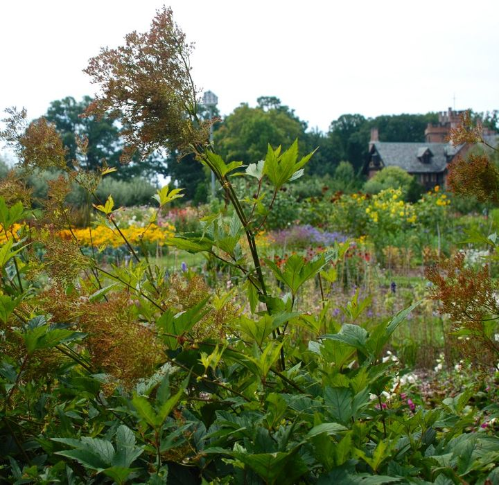 Looking over the Cutting Garden to the Hall. The dried flower spikes of Filipendula in the forefront is part of the north perennial border that separates the Cutting Garden from the rest of the Great Garden.