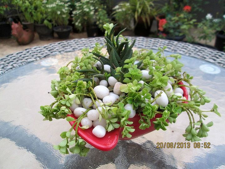 another succulent container, container gardening, flowers, gardening, succulents