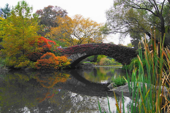 new york s central park, gardening