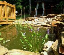 just updating pictures from last years pond project, outdoor living, ponds water features, I am just loving the colors the green water the orange of the fish and the purple flowers