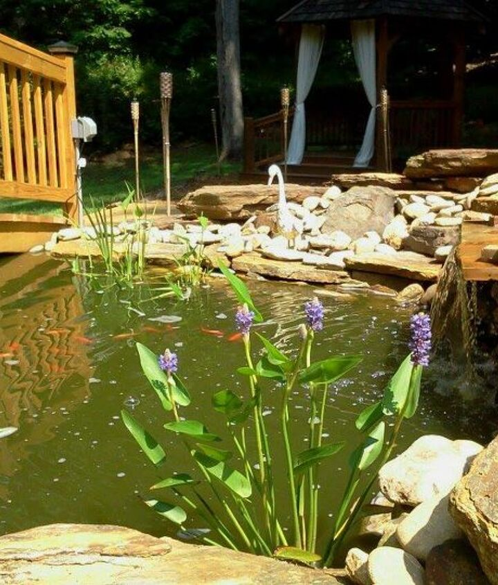 I am just loving the colors, the 'green' water  the orange of the fish and the purple flowers!
