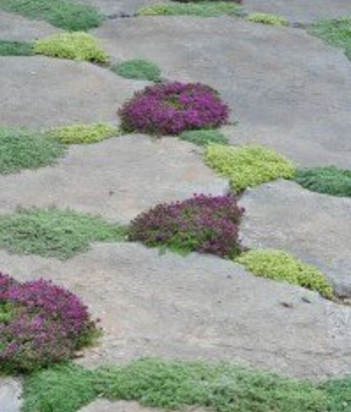 It has always been a dream of mine to create a stone walkway leading to the tree with the swing. But it has to be dreamy looking... This is a perfect way to trim the stones while adding color and incorporating useful herbs and plants.