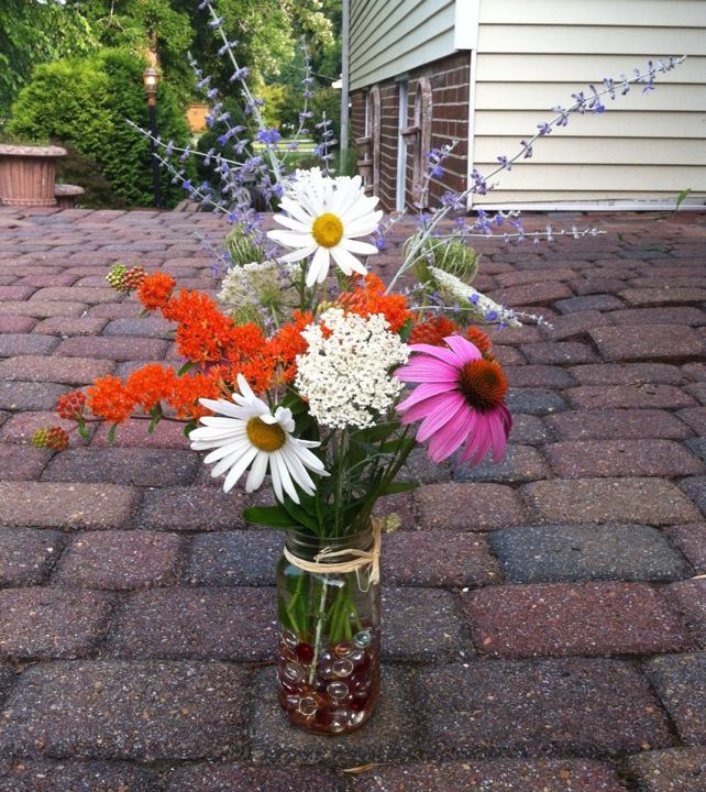 wildflower identification, flowers, gardening