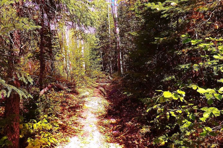 A hiking trail to the lake.