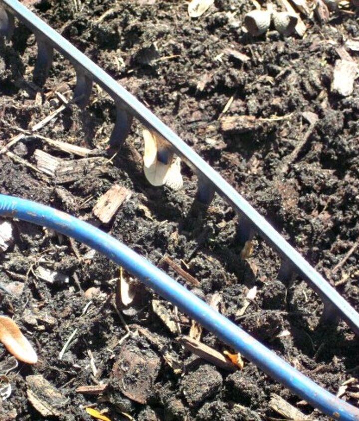Use a garden rake or cultivator to break up the ground.