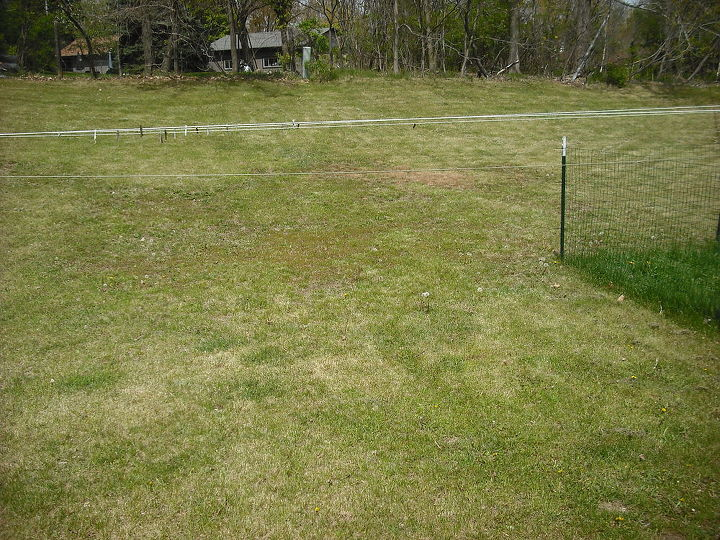 New back yard, no trees and lots of lawn