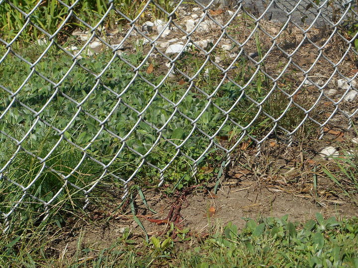 This a just part of her escape corner, it ran 3 lengths.  The gap between the fence and the ground was anywhere from1 to 4 inches.