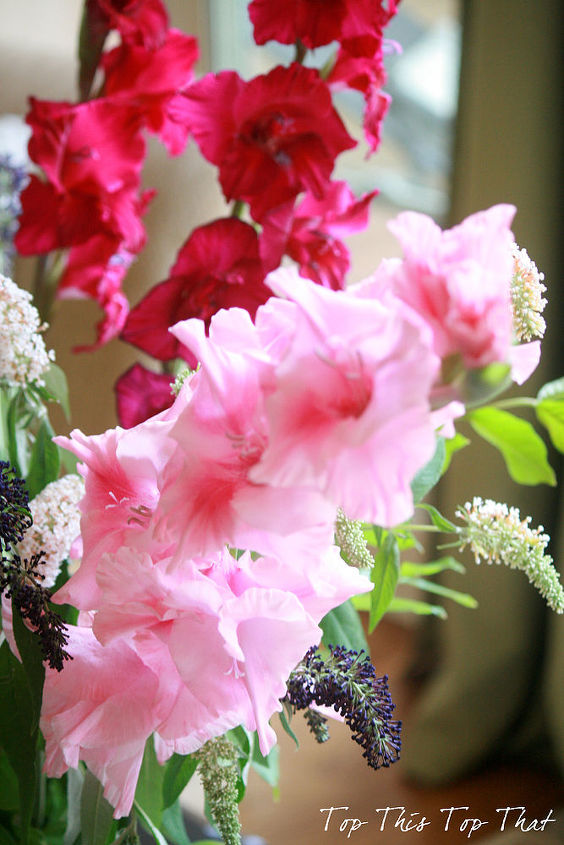 Various Shades of Pink Gladiolus Stems
