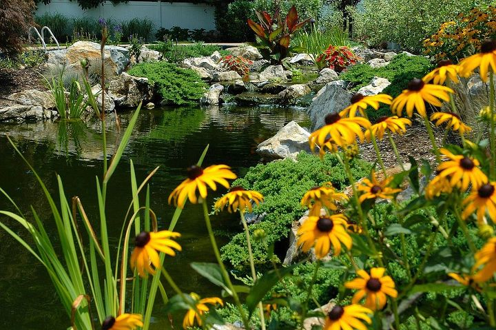 This pond project won an International award from the Association of Pool and Spa Professionals (APSP) Silver medal for waterfeatures. www.deckandpatio.com