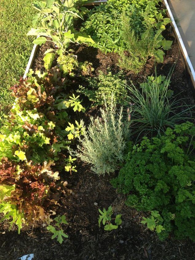 mini herb garden, gardening, Back yard mini garden
