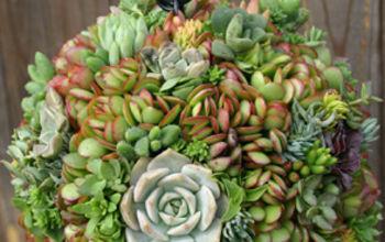 succulent orb experiment, container gardening, flowers, gardening, succulents, photo credit Debra Lee Baldwin